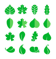 different leaf set icons design eco vector image