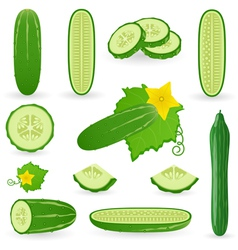 Icon Set Cucumber vector image
