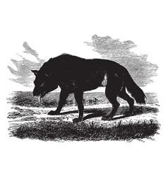 American wolf vintage vector