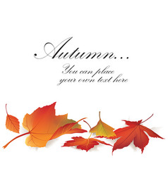 fall leaf nature banner autumn leaves background vector image