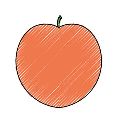 Delicious peach fruit vector