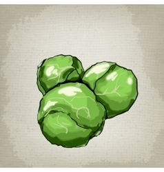 Brussels sprouts vector image