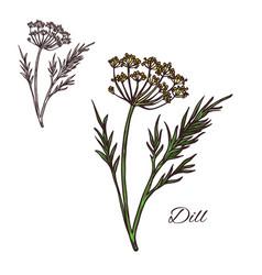 Dill seasoning plant sketch plant icon vector