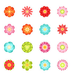 flat style different flowers in garden summer vector image