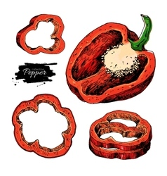 Pepper hand drawn set vegetable artistic vector