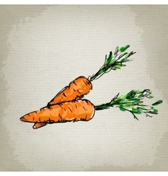 Fresh carrots vector