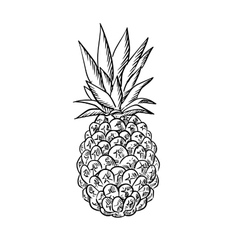 Pineapple fruit with fresh leaves in sketch style vector