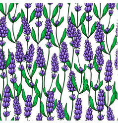 Lavender drawing seamless pattern isolated vector