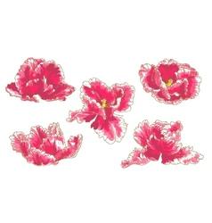 Set of 5 Tulip Flowers vector image