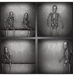skeleton on the wall collection vector image