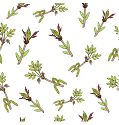 spring branches with leaves and buds vector image