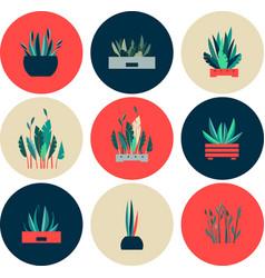 Set of icons of indoor flowers vector