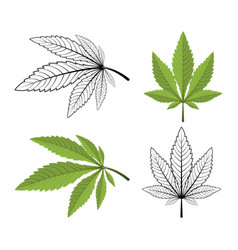 Cannabis leaf on a white background vector