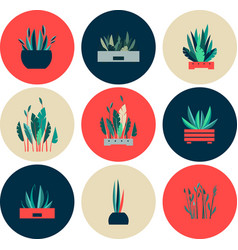 Set of icons of indoor flowers vector