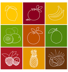 Tropical fruit linear icons vector