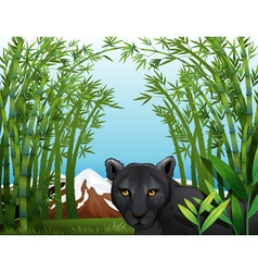 A black panther at the bamboo forest vector
