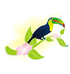 Exotic bird toucan vector