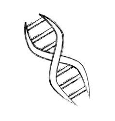 Adn genetic code vector