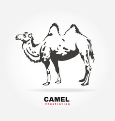 bactrian camel vector image vector image