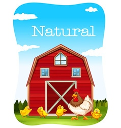 Chicken and red barn vector