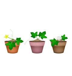 Fresh green marrow plants in ceramic flower pots vector