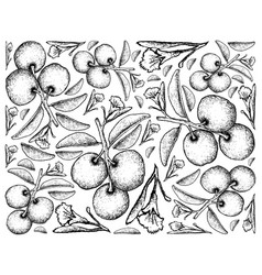 Hand drawn background of fresh tallow plums vector