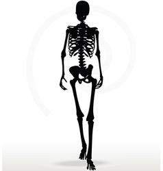 skeleton silhouette in walk vector image