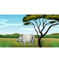 A bull in the forest vector