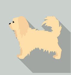 Pekingese icon in flat style for web vector