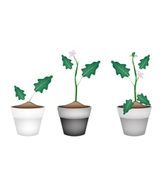 Green Eggplant Tree in Ceramic Flower Pots vector image