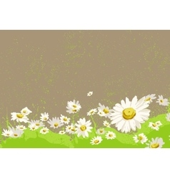 Bright chamomile field vector
