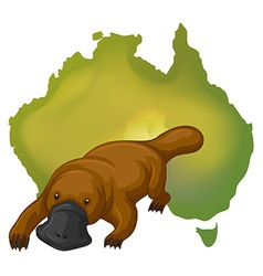 Platypus and australia map vector