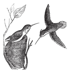 Hummingbird vintage engraving vector image vector image