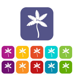 Palm tree with coconuts icons set vector
