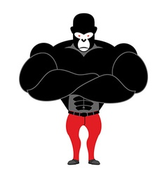 Gorilla bodybuilder Strong black monkey with big vector image vector image