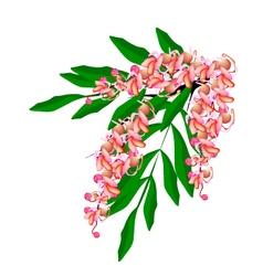 Pink cassia fistula flower i vector