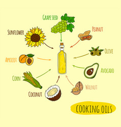 Hand drawn infographic of cooking oil sorts vector