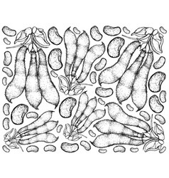 Hand drawn of velvet bean pods background vector