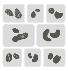 Monochrome icons with beans and nuts vector