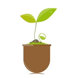 Flower pot with plants vector image
