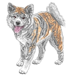 Sketch dog akita inu japanese breed smiles vector