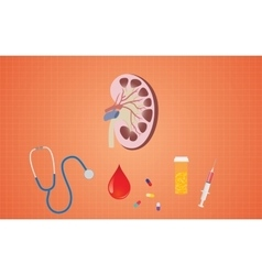 Kidney health with medicine tools like pills vector