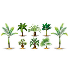 Different types of palm trees vector