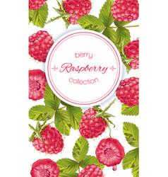 raspberry vertical banner vector image