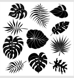Isolated silhouettes of tropical palm leaves vector