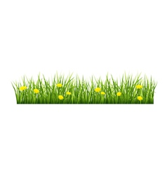 Grass with yellow flowers vector