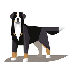 Bernese mountain dog minimalist image vector