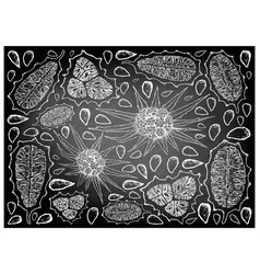 Hand drawn of horned melon and pandanus chalkboard vector