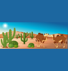Two camels standing in desert field vector