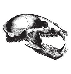 Wolf skull vintage vector